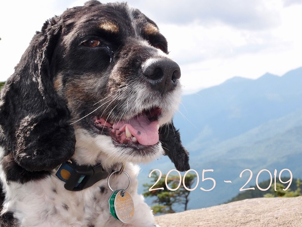 Snickers 2005-2019